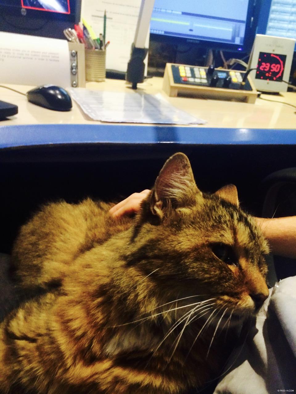 un chat dans les studios de sanef 107.7